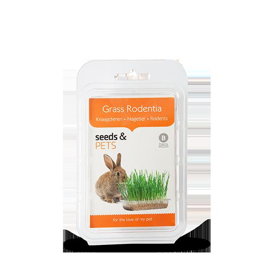 Grass Rodentia Knaagdieren