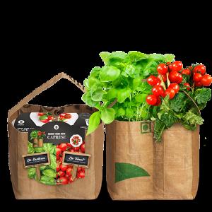 Seeds & Duo garden