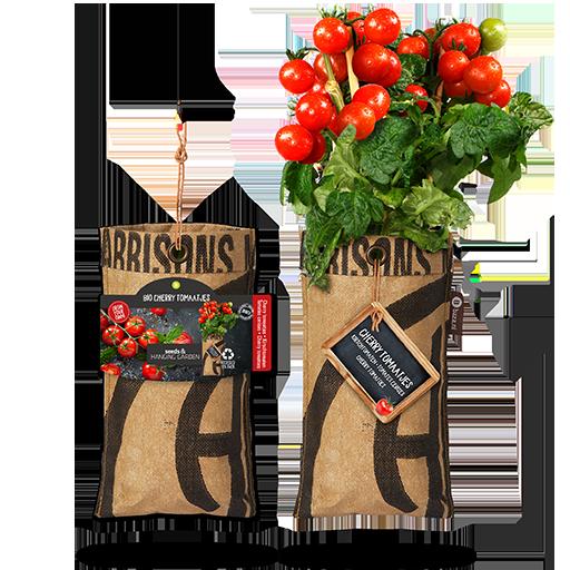 Bio Cherry Tomaatjes