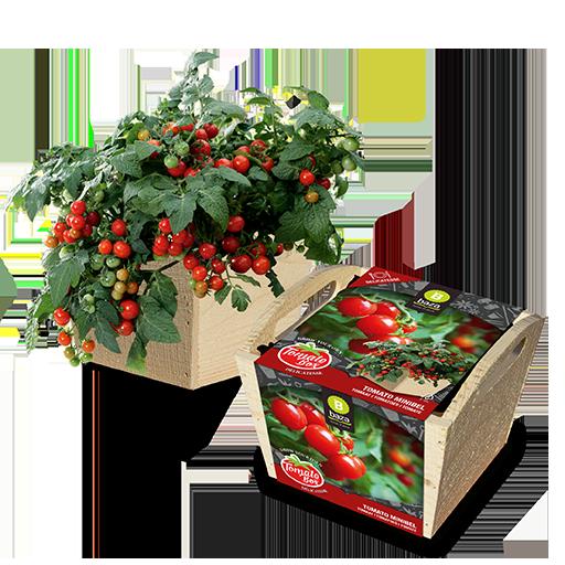 Tomato Minibel