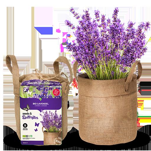 Bio Lavendel