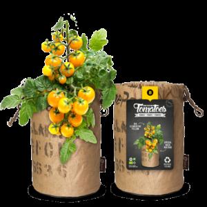 Bio Clementine Yellow
