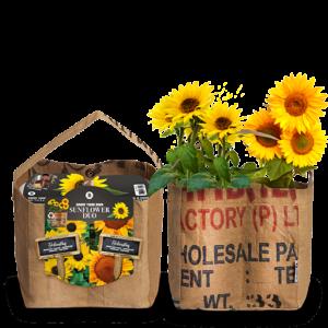 Bio Sunflowers