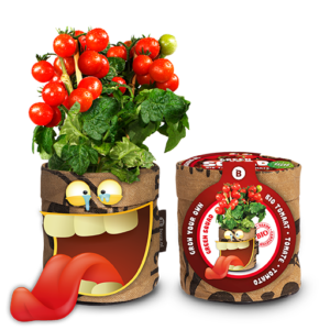Snack Tomatoes