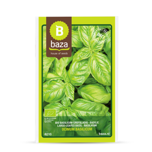 BIO Basilicum grofbladig