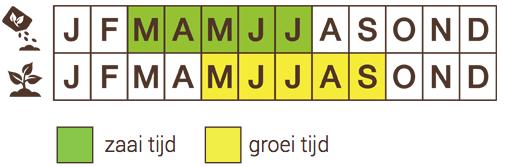 Sowing schedule Radijs, witpunt GAUDRY 2