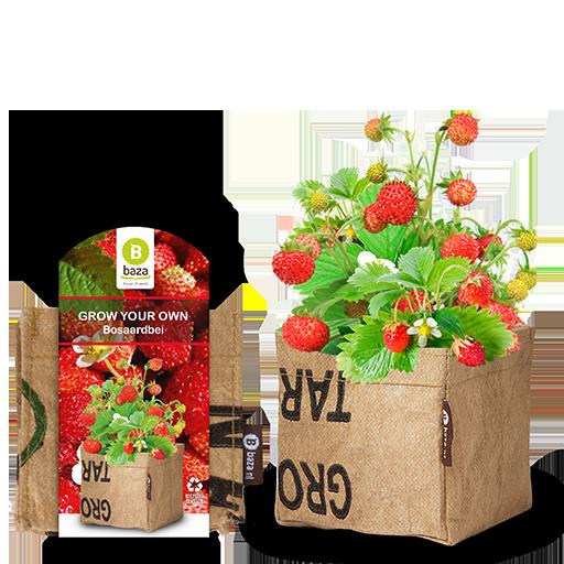 Wild Erdbeere